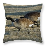Grazing Geese Throw Pillow