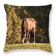 Grazing Horse At Sunset Throw Pillow