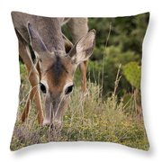 Grazing Oklahoma Throw Pillow