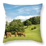 Grazing Summer Cows Throw Pillow