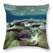Great Barrier Reef Near Port Douglas Throw Pillow