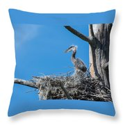 Great Blue Heron Chick Throw Pillow