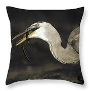 Great Blue Heron Eating Marine Iguana Throw Pillow by Tui De Roy