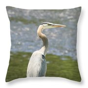 Great Blue Heron In Light  Throw Pillow