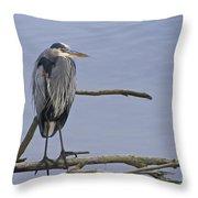 Great Blue Heron On Alert Throw Pillow
