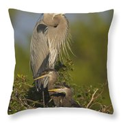 Great Blue Heron With Chicks Florida Throw Pillow