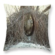 Great Bowerbird Male In Bower Australia Throw Pillow
