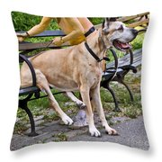 Great Dane Sitting On Park Bench Throw Pillow
