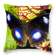 Great Eggfly Butterfly Throw Pillow