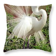 Great Egret Courtship Display Throw Pillow