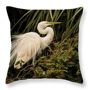 Great Egret In Breeding Plumage Throw Pillow