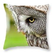 Great Gray Owl Close Up Throw Pillow