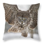Great Gray Owl Pictures 634 Throw Pillow