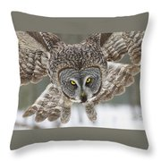 Great Gray Owl Pictures 648 Throw Pillow