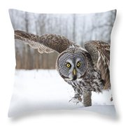 Great Gray Owl Pictures 658 Throw Pillow