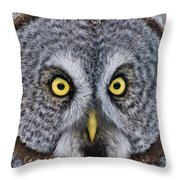 Great Gray Owl Pictures 680 Throw Pillow