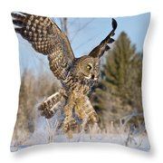 Great Gray Owl Pictures 767 Throw Pillow