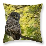 Great Gray Owl Pictures 779 Throw Pillow