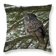 Great Gray Owl Pictures 780 Throw Pillow