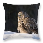 Great Gray Owl Pictures 788 Throw Pillow
