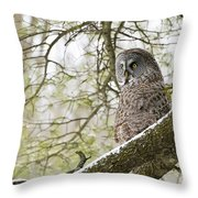 Great Gray Owl Pictures 804 Throw Pillow