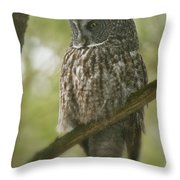Great Gray Owl Pictures 823 Throw Pillow