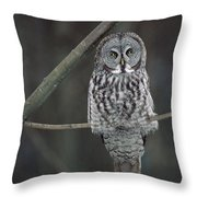 Great Gray Owl Portrait North America Throw Pillow