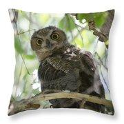 Great Horned Owl Fledgling  Throw Pillow