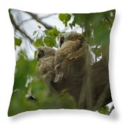 Great Horned Owlets 5 20 2011 Throw Pillow