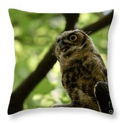 Great Horned Youngster Throw Pillow
