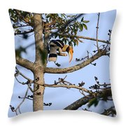 Great Indian Hornbill Throw Pillow