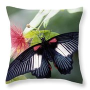 Great Mormon And Mimosa - Fs000581 Throw Pillow