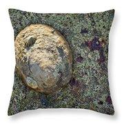 Great Owl Limpet Throw Pillow