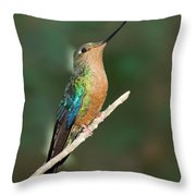 Great Sapphirewing Throw Pillow