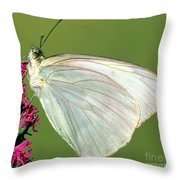 Great Southern White Butterfly Throw Pillow