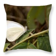 Great Southern White Butterfly Throw Pillow by Rudy Umans