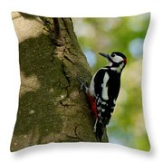 Great Spotted Woodpecker Throw Pillow