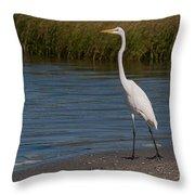Great White 184 Throw Pillow
