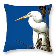 Great White Curves Throw Pillow