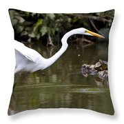 Great White Egret Looking For Fish 1 Throw Pillow