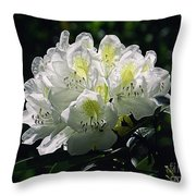 Great White Rhododendron Throw Pillow