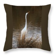 Greater Egret Posturing Throw Pillow