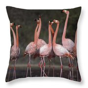 Greater Flamingo Group Courtship Dance Throw Pillow