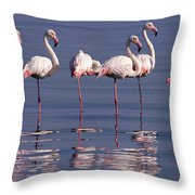 Greater Flamingo Group Throw Pillow