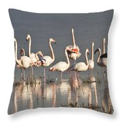 Greater Flamingos At Laguna De La Fuente De Piedra Throw Pillow
