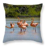 Greater Flamingos Throw Pillow