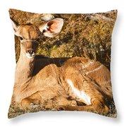 Greater Kudu Calf Throw Pillow