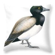 Greater Scaup Throw Pillow by Anonymous