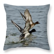 Greater Scaup Pair Throw Pillow