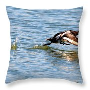 Greater Scaup Takes Flight Throw Pillow